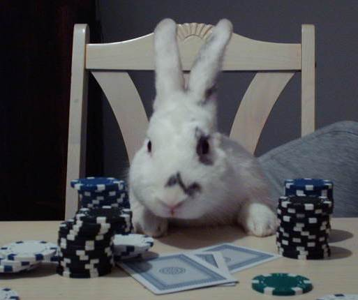 Rabbit Poker 2